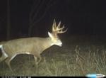 Owen's Deer Pics (15)