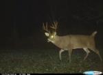 Owen's Deer Pics (49)