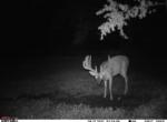 Owen's Deer Pics (72)