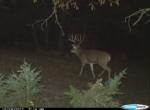 Owen's Deer Pics (79)