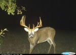 Owen's Deer Pics (8)