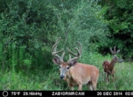 trail-camera-land-for-sale-wapello-county-iowa