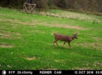 trail-camera-land-for-sale-wapello-county-iowa-10