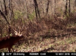 trail-camera-land-for-sale-wapello-county-iowa-13