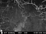 trail-camera-land-for-sale-wapello-county-iowa-15