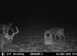 trail-camera-land-for-sale-wapello-county-iowa-18