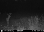 trail-camera-land-for-sale-wapello-county-iowa-19
