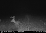 trail-camera-land-for-sale-wapello-county-iowa-26