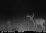trail-camera-land-for-sale-wapello-county-iowa-27