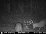 trail-camera-land-for-sale-wapello-county-iowa-29