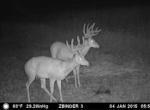 trail-camera-land-for-sale-wapello-county-iowa-3
