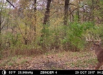 trail-camera-land-for-sale-wapello-county-iowa-31
