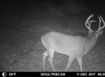 trail-camera-land-for-sale-wapello-county-iowa-37