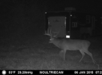 trail-camera-land-for-sale-wapello-county-iowa-4