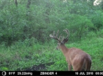 trail-camera-land-for-sale-wapello-county-iowa-44