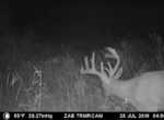 trail-camera-land-for-sale-wapello-county-iowa-48