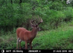 trail-camera-land-for-sale-wapello-county-iowa-58