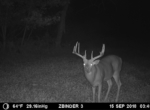trail-camera-land-for-sale-wapello-county-iowa-66