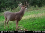 trail-camera-land-for-sale-wapello-county-iowa-75