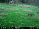 trail-camera-land-for-sale-wapello-county-iowa-9