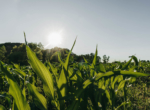 Lucas County Iowa Land For Sale (126)