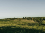 Lucas County Iowa Land For Sale (128)
