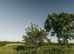 Lucas County Iowa Land For Sale (129)