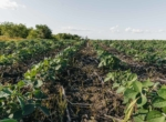 Lucas County Iowa Land For Sale (54)