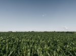 Lucas County Iowa Land For Sale (57)