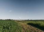 Lucas County Iowa Land For Sale (58)