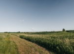 Lucas County Iowa Land For Sale (60)