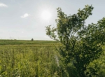 Lucas County Iowa Land For Sale (69)