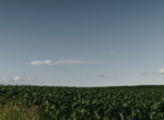 Lucas County Iowa Land For Sale (75)