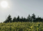 Lucas County Iowa Land For Sale (85)