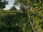 Lucas County Iowa Land For Sale (89)