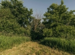 Lucas County Iowa Land For Sale (94)