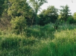 Land for Sale Decatur County Iowa-2