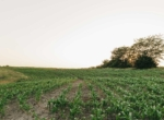 Land for Sale Decatur County Iowa-47