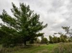 Land For Sale_Building Site_Dallas County Iowa_6 acres (16)