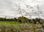 Land For Sale_Building Site_Dallas County Iowa_6 acres (17)