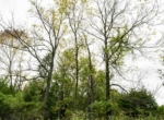 Land For Sale_Building Site_Dallas County Iowa_6 acres (6)